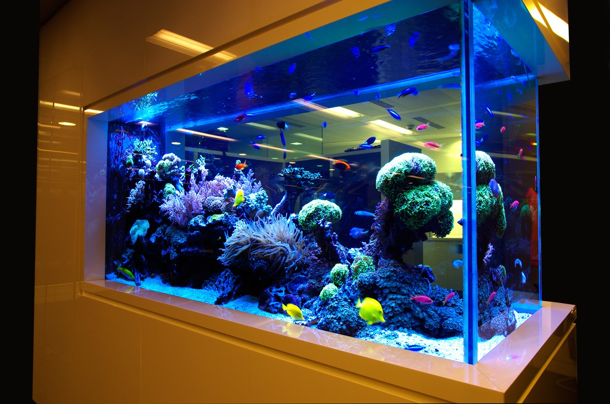 Картинки по запросу аквариум