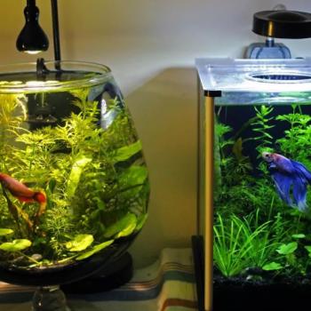 Стекло для аквариумов
