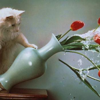 Разбилась ваза - что делать?