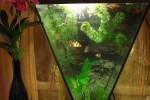 Выбираем стекло для аквариума?